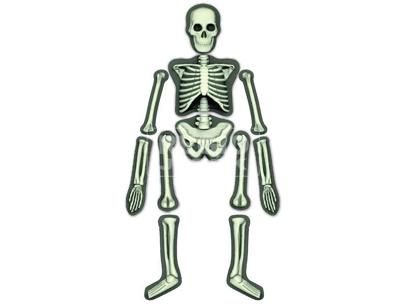 kép nagyítása 4M emberi csontváz készlet