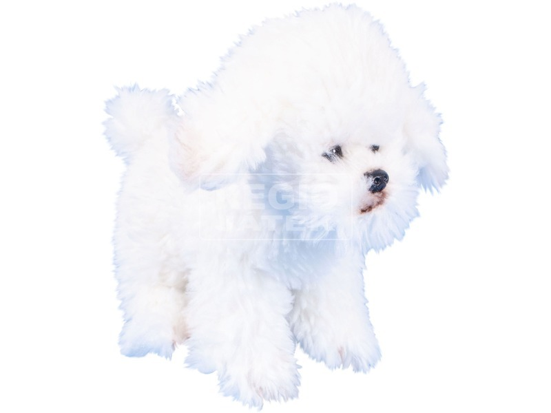 Bichon Frise ülő kutya plüssfigura - 18 cm