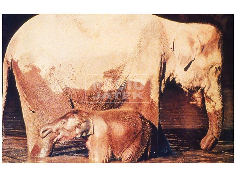 kép nagyítása Állatok és kicsinyeik diafilm 34101007