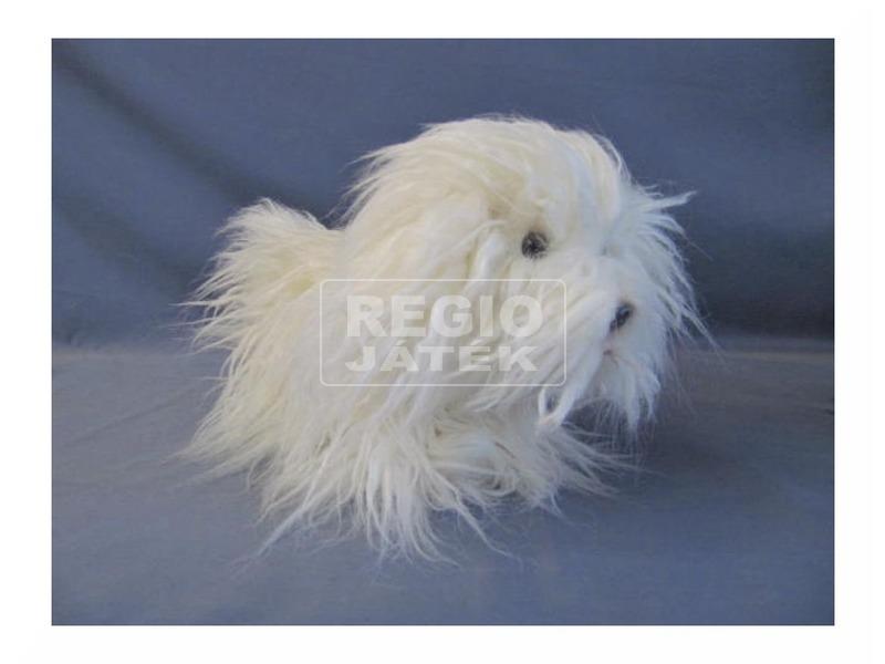 Fehér puli kutya 10. 5
