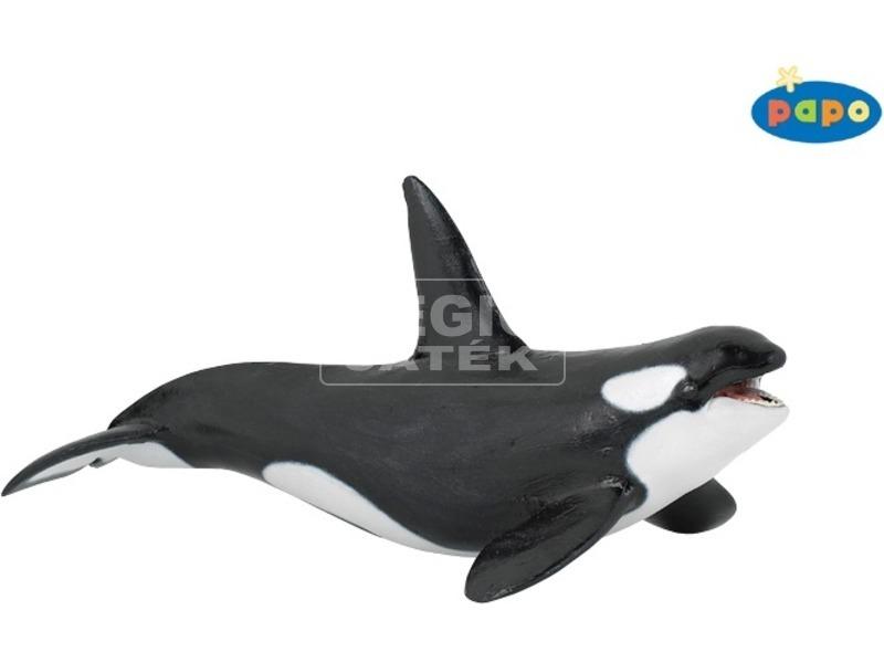 Papo gyilkos bálna 56000