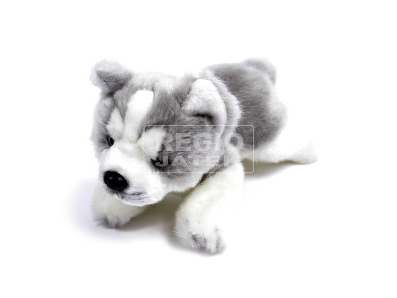 Husky kutya fekvő plüssfigura - 23 cm