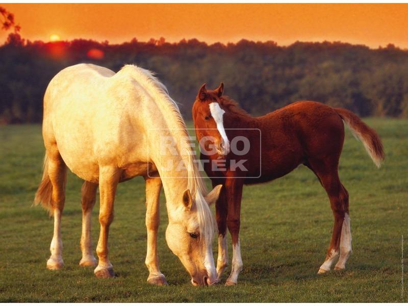 kép nagyítása Gyönyörű lovak 500 darabos puzzle