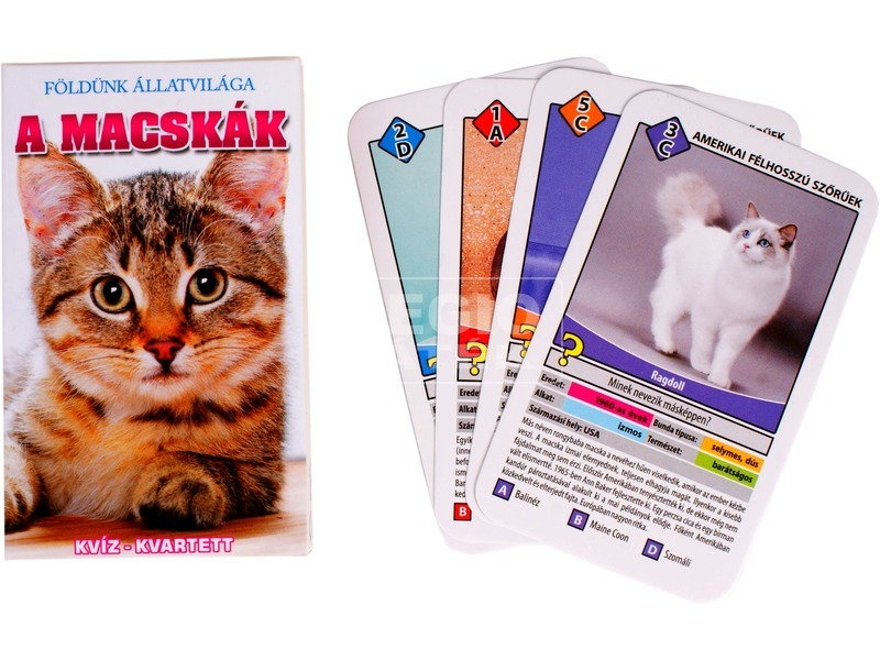 Macskák ismeretterjesztő kártya