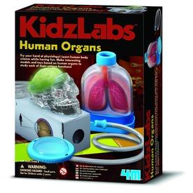4M emberi szervek készlet