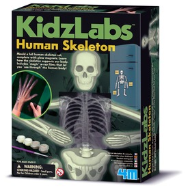 4M emberi csontváz készlet