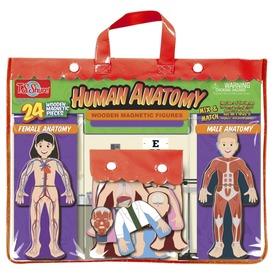 Emberi test mágneses öltöztető játék Itt egy ajánlat található, a bővebben gombra kattintva, további információkat talál a termékről.