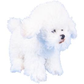 Bichon Frise kutya ülő plüssfigura - 18 cm