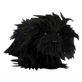 Fekete puli kutya 10. 5