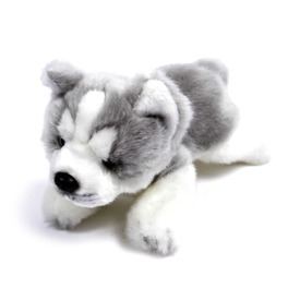 Husky kutya fekvő plüssfigura - 23 cm Itt egy ajánlat található, a bővebben gombra kattintva, további információkat talál a termékről.