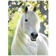 kép nagyítása Gyönyörű ló 500 darabos puzzle