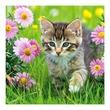 kép nagyítása Állatkölykök 3 x 55 darabos puzzle